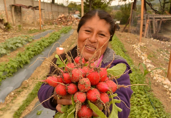Woman holding radishes harvested from a garden