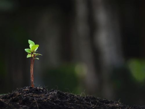 Plant sprouting from dirt on the ground