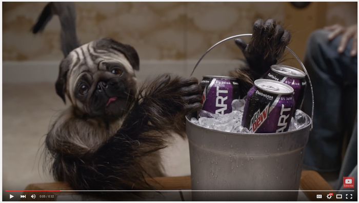 Pug holding bucket of Mt. Dew sodas